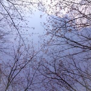 写真 2016-03-28 13 09 49 (1)